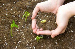 لماذا خصّ القرآن خروج النبات فی البلد الطیب بإذن الربّ و…