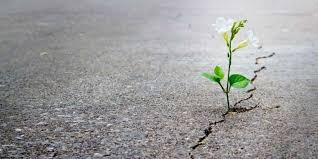 نقش امید در زندگی