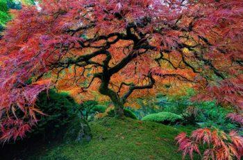 نام درختان بهشتی