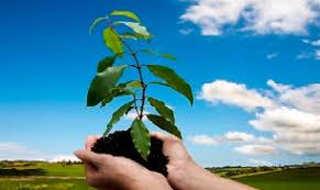 چگونه جمادات و نباتات حضرت حق را تسبیح می کنند؟